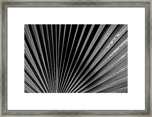 Palm Abstract Framed Print