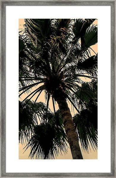 Palm Against The Sky Framed Print