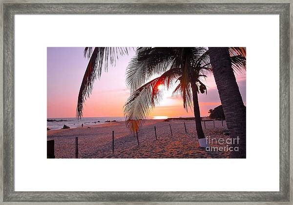Palm Collection - Sunset Framed Print