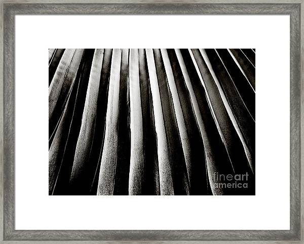 Palm Frond Framed Print