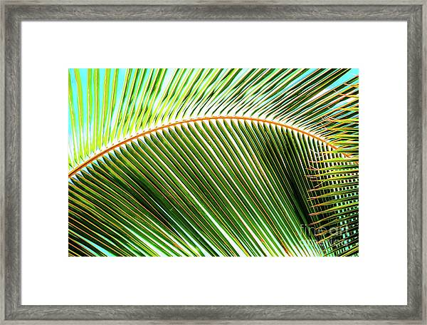 Palm Frond Sway Framed Print