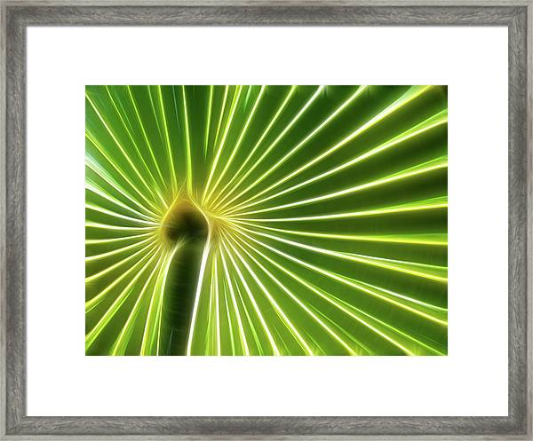 Palm Glow Framed Print