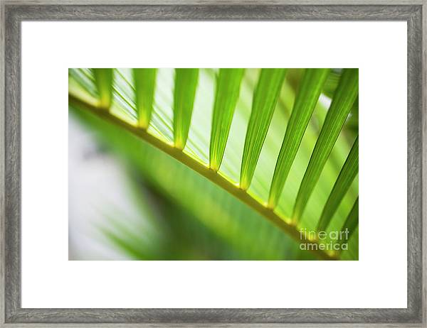 Palm Greenery Framed Print