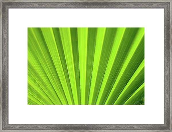 Palm Leaf Abstract Framed Print