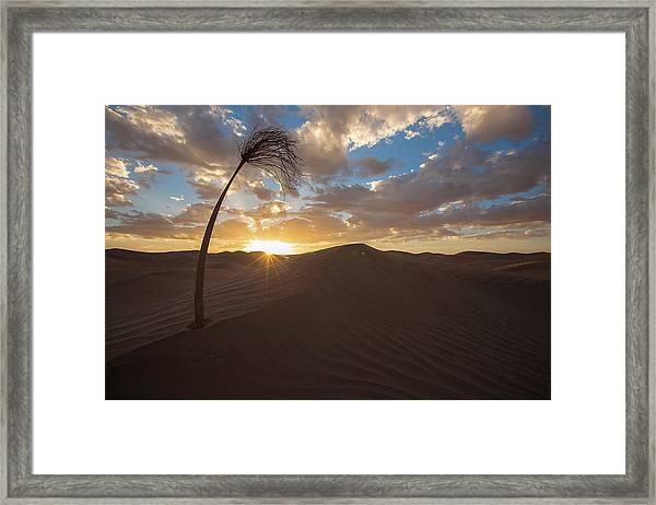 Framed Print featuring the photograph Palm On Dune by Ibrahim Azaga