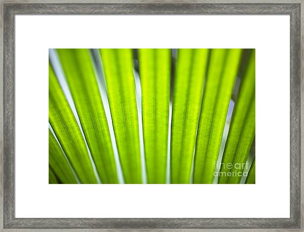 Palm Patterns Macro Framed Print