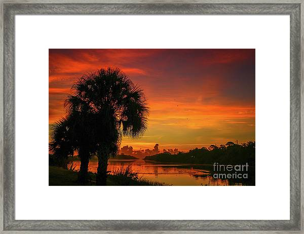 Framed Print featuring the photograph Palm Silhouette Sunrise by Tom Claud