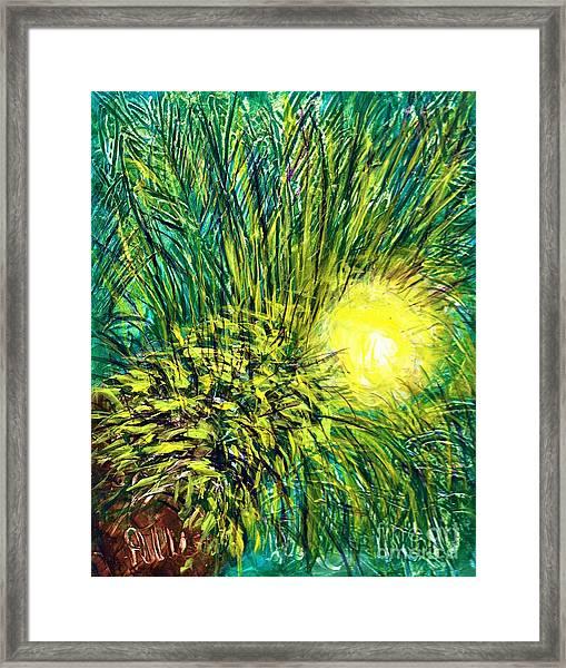 Palm Sunburst  Framed Print