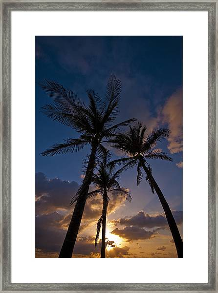 Palm Sunrise Framed Print