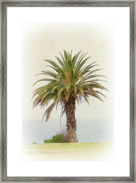 Palm Tree In Coastal California In A Retro Style Framed Print