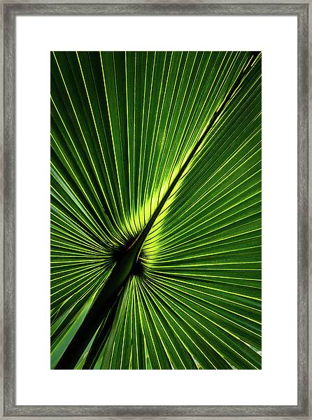 Palm Tree With Back-light Framed Print