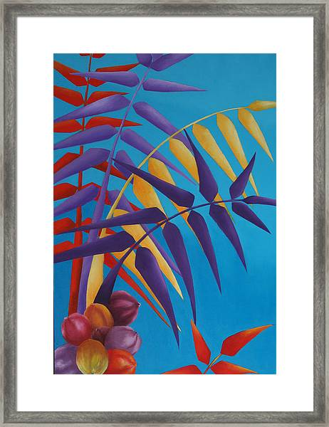 Palm Tree With Coconuts 1 Framed Print