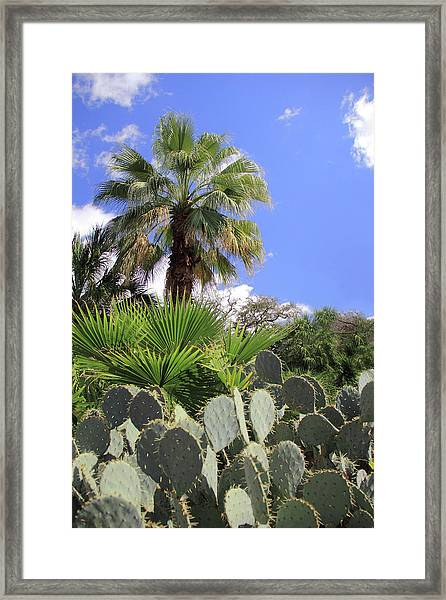Palm Trees And Cactus Framed Print