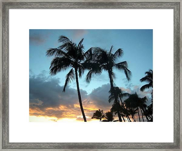 Palm Trees At Sunset Framed Print