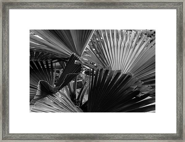 Palmetto In Black And White Framed Print