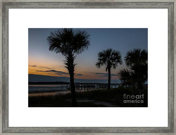 Palmetto Sky Framed Print
