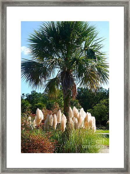 Palmetto Tree  Framed Print