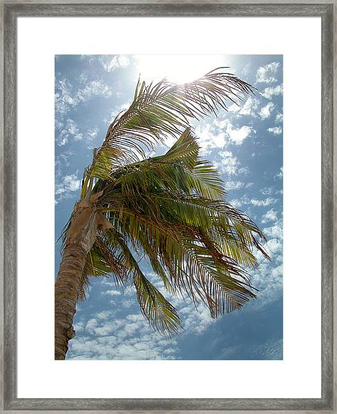 Palms Against The Sky - Mexico Framed Print