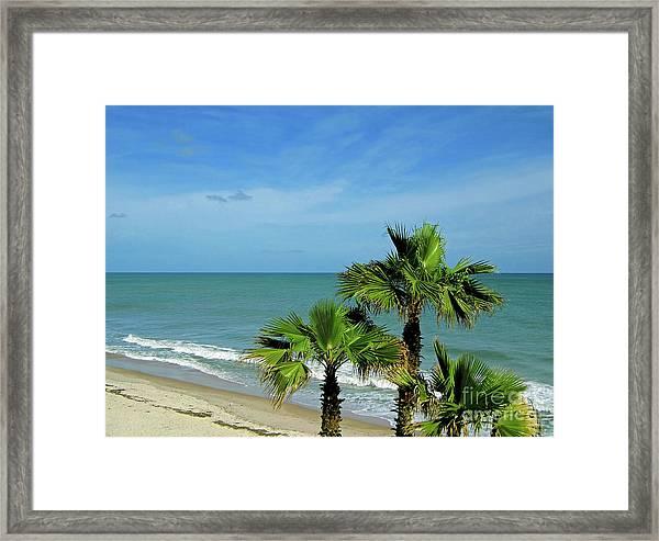 Palms At Vero Beach Framed Print