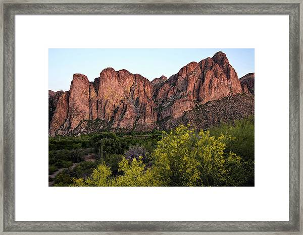 Paloverde In Bloom Near Saguaro Lake Framed Print