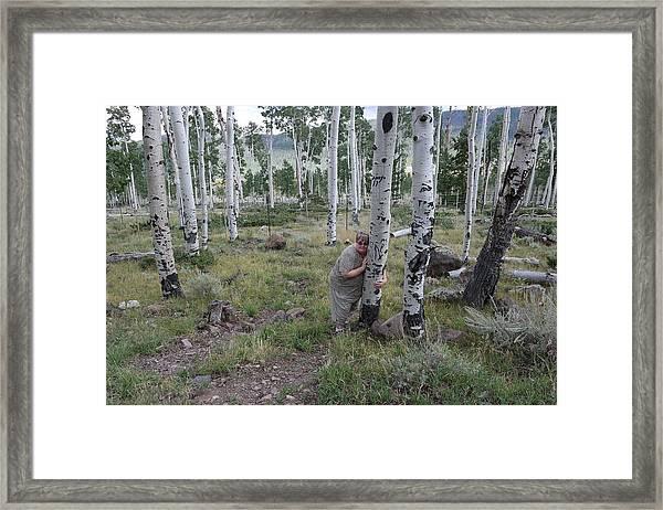 Pando  Framed Print