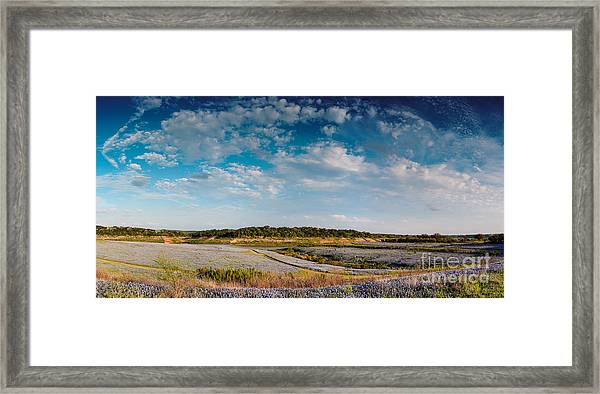 Panorama Of Muleshoe Bend Recreational Area Bluebonnets - Spicewood Lake Travis Texas Hill Country Framed Print