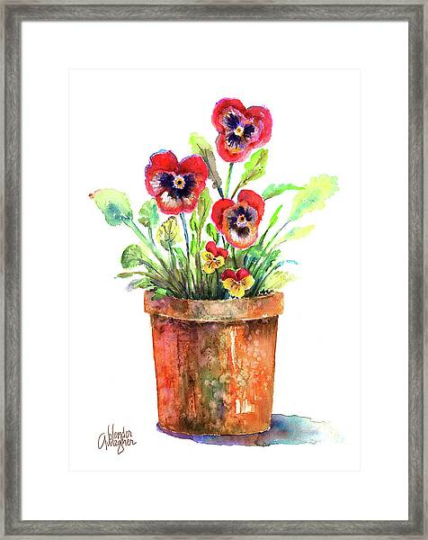 Pansies In A Clay Pot Framed Print