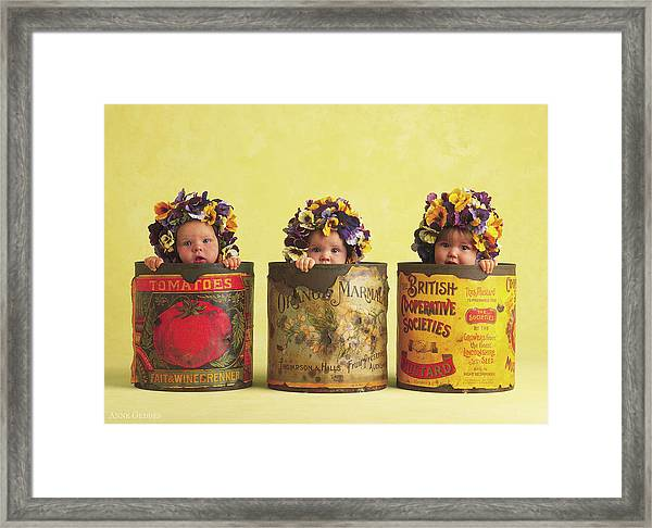 Pansy Tins Framed Print