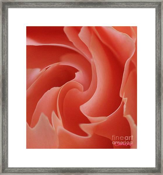 Paper Petals Framed Print
