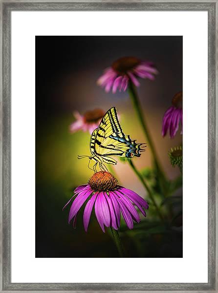 Papilio Framed Print