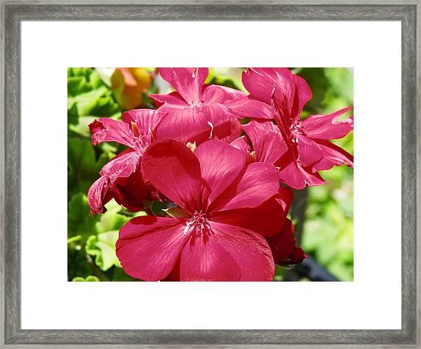Paradise Bloom Framed Print