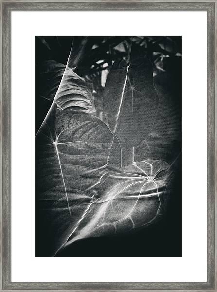 Parallel Botany #5266 Framed Print