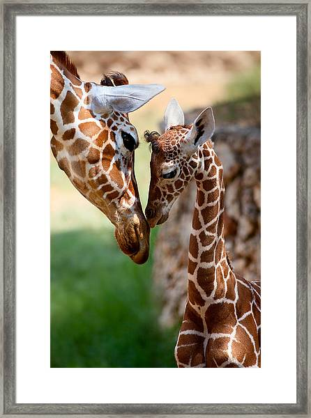 Parent-child Relationship Framed Print