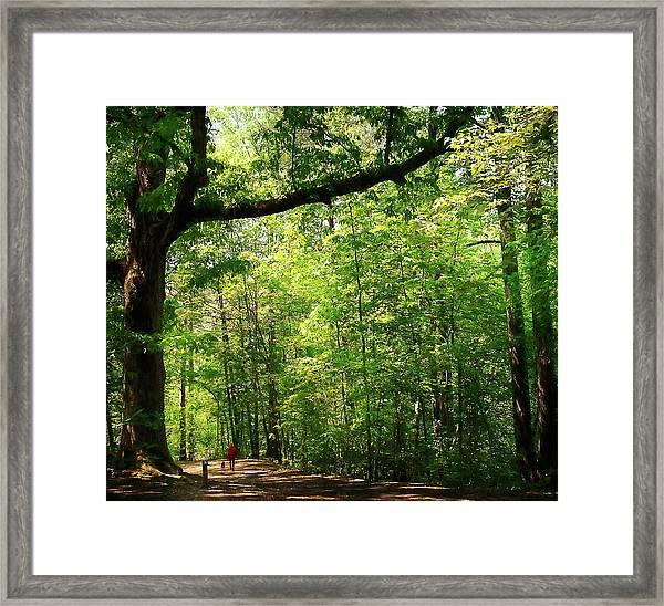 Paris Mountain State Park South Carolina Framed Print