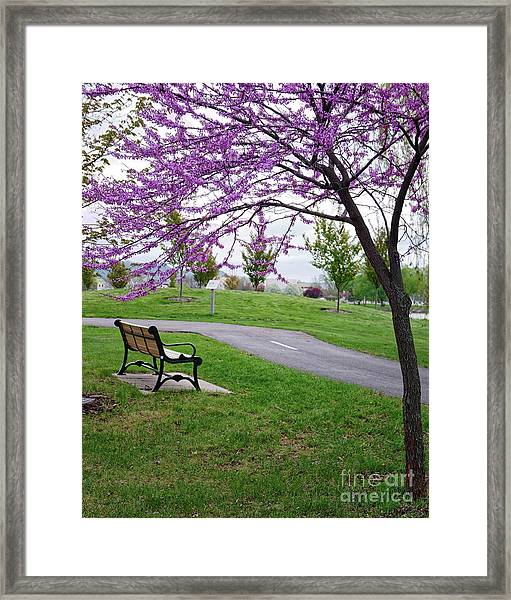 Framed Print featuring the photograph Park Bench With Redbud Tree Winona Mn By Yearous by Kari Yearous