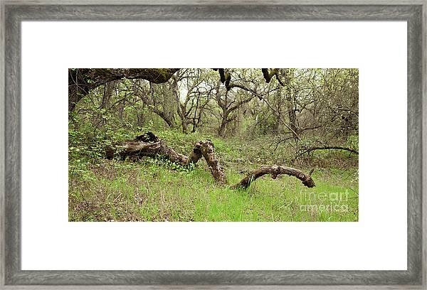 Park Serpent Framed Print
