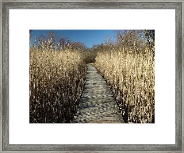 Parker River Wildlife Refuge Path Framed Print
