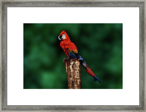 Parrot Bodypainting Illusion Framed Print