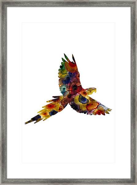 Parrot Framed Print