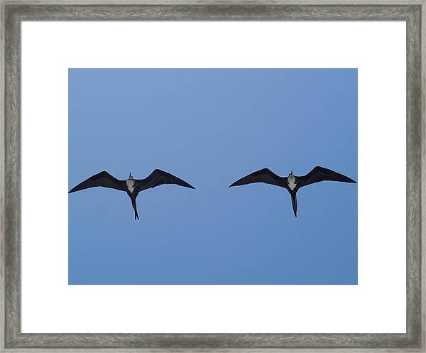 Partners In Flight Framed Print by Richard Mansfield