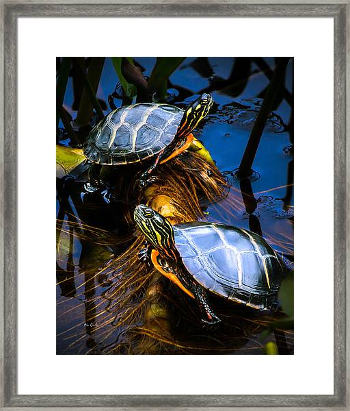 Passing The Day With A Friend Framed Print