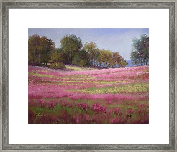 Passion Field Framed Print by Paula Ann Ford