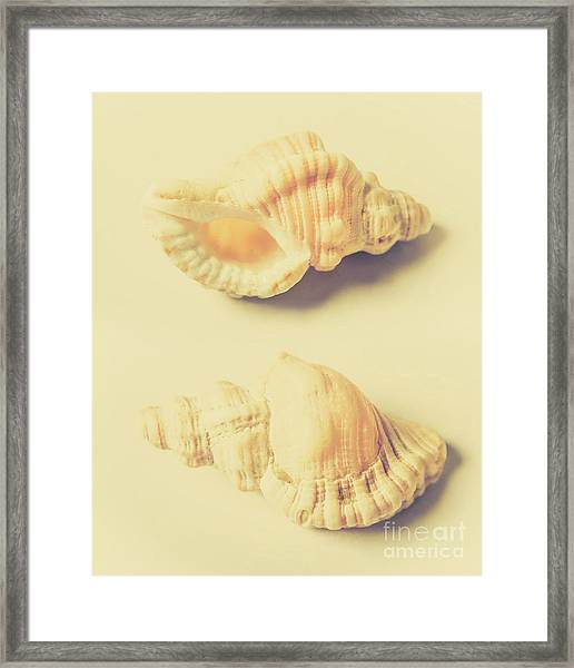 Pastel Seashell Fine Art Framed Print