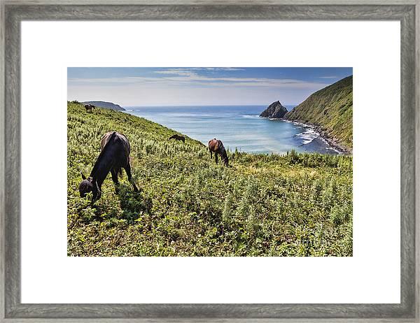 Pasture #2746 Framed Print