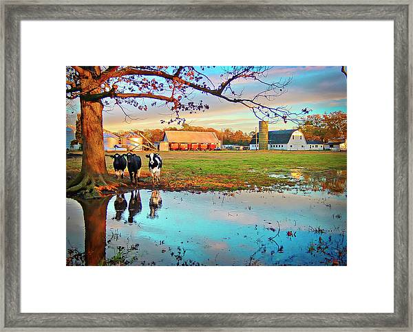 Framed Print featuring the photograph Pasture At Bacon's Castle by Williams-Cairns Photography LLC