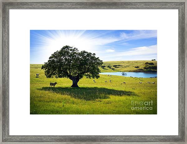 Pasturing Cows Framed Print