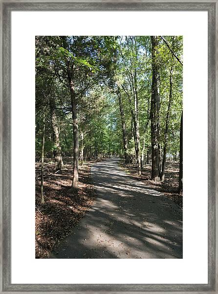 Path Around Lake Framed Print