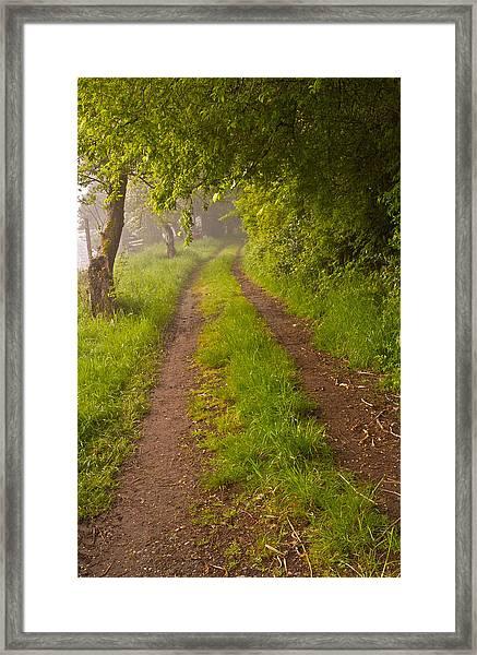 Path From Bullock Lake Framed Print