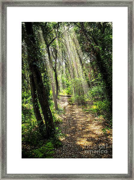 Path In Sunlit Forest Framed Print