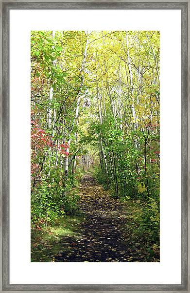 Path In The Woods 3 Framed Print